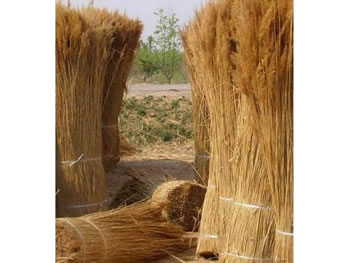 bundles of thatch roofing material